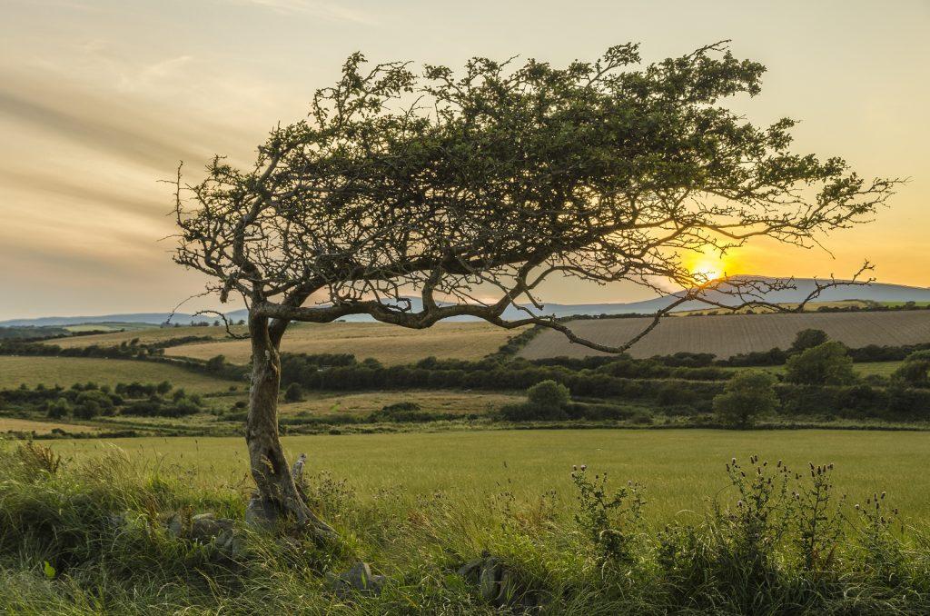 Wind Blown in Santon by Brian Green
