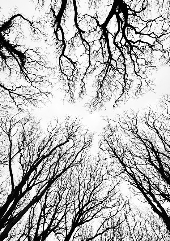 Reach for the Sky by Andrea Thrussell