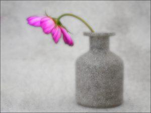 IOTY Digital third place 'Purple Flower' by Brian Goldie