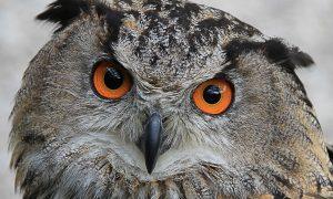 Owl by Jason Quayle