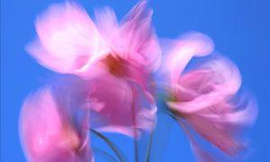 Wind Blown by Brian Goldie