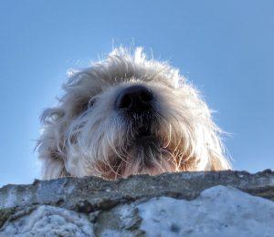 Looking Up, Looking Down