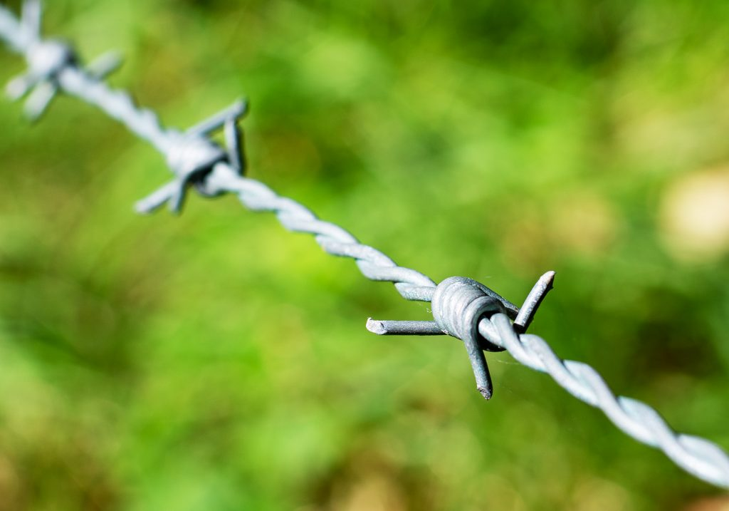 Barbed Wire by Georgina Shaw