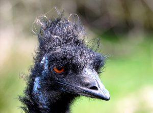 Waiting for a Post-Lockdown Haircut