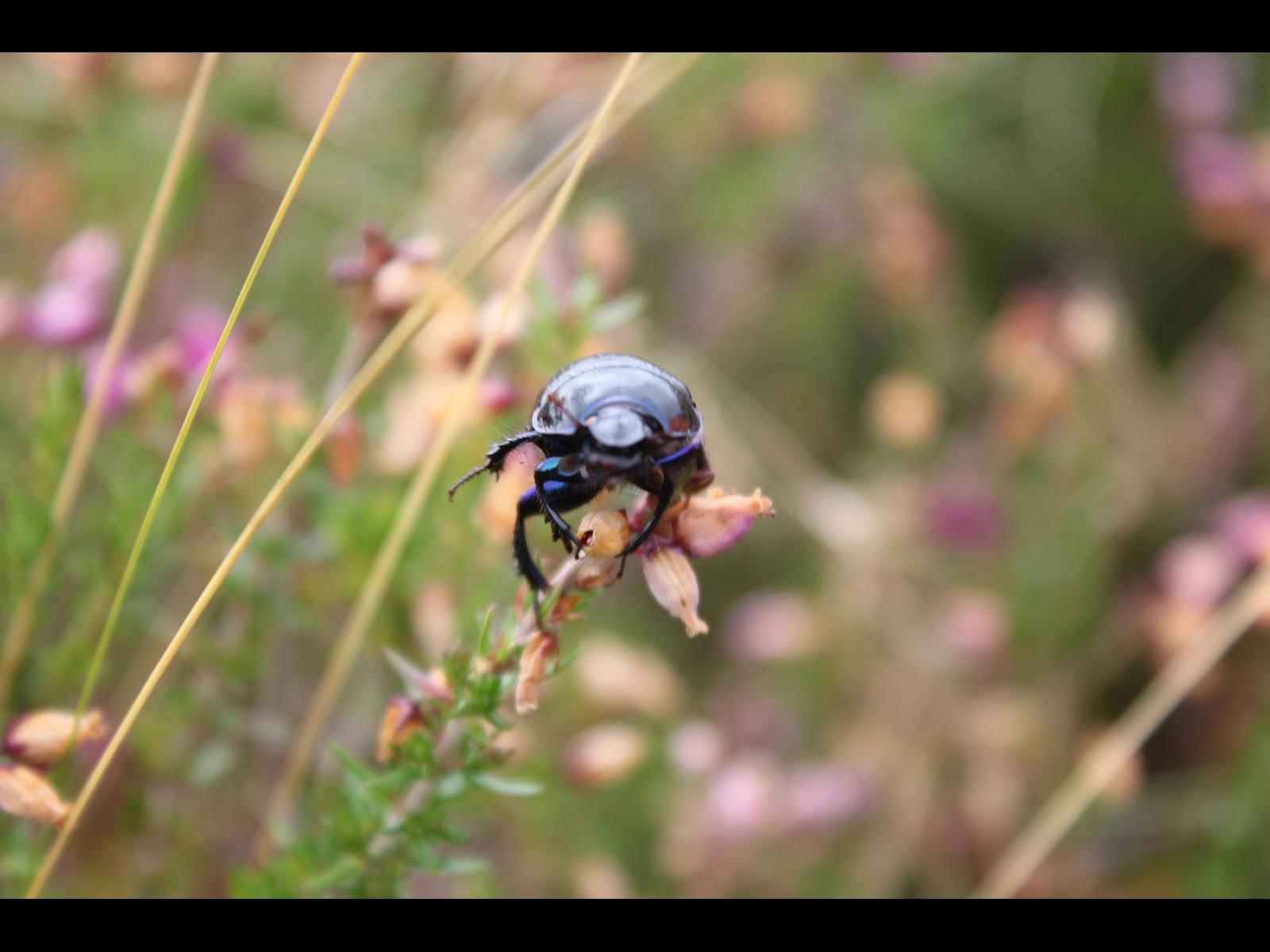 Beetle by Stuart Alexander