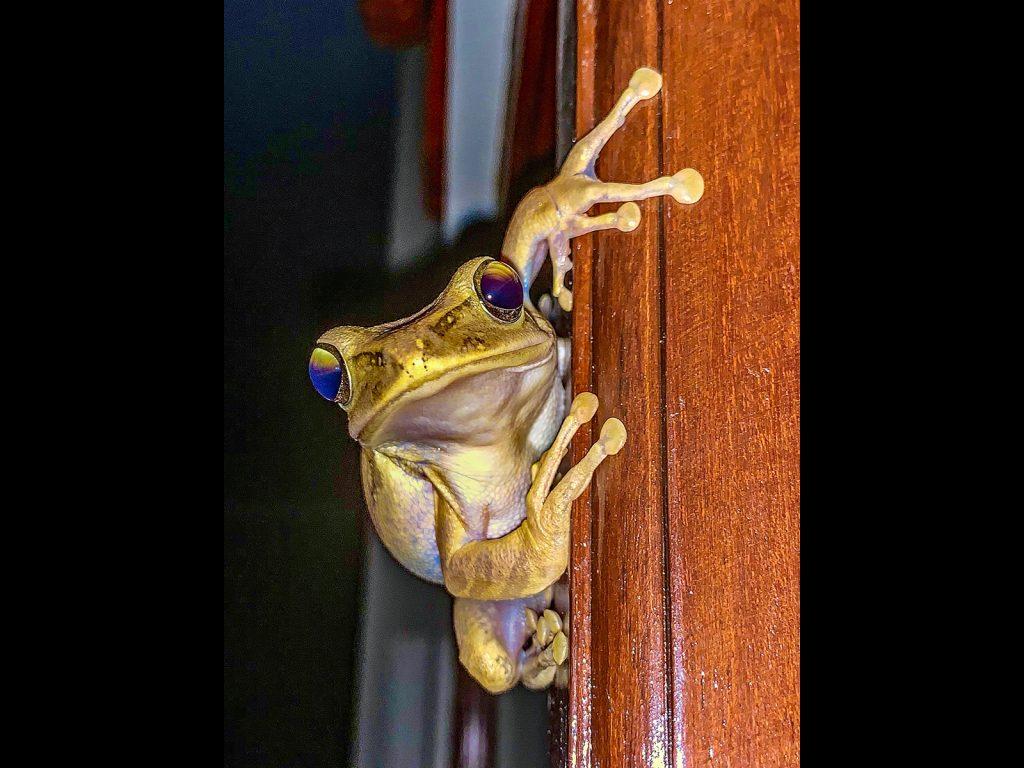Frog by Simon Jennings