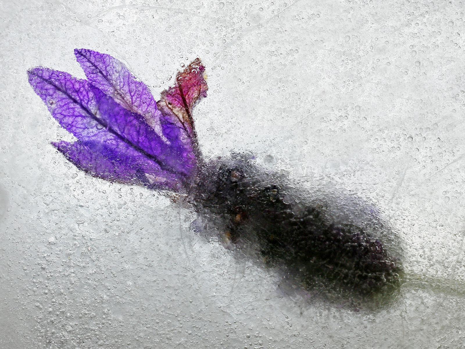 Frozen Flower by Sue Clegg