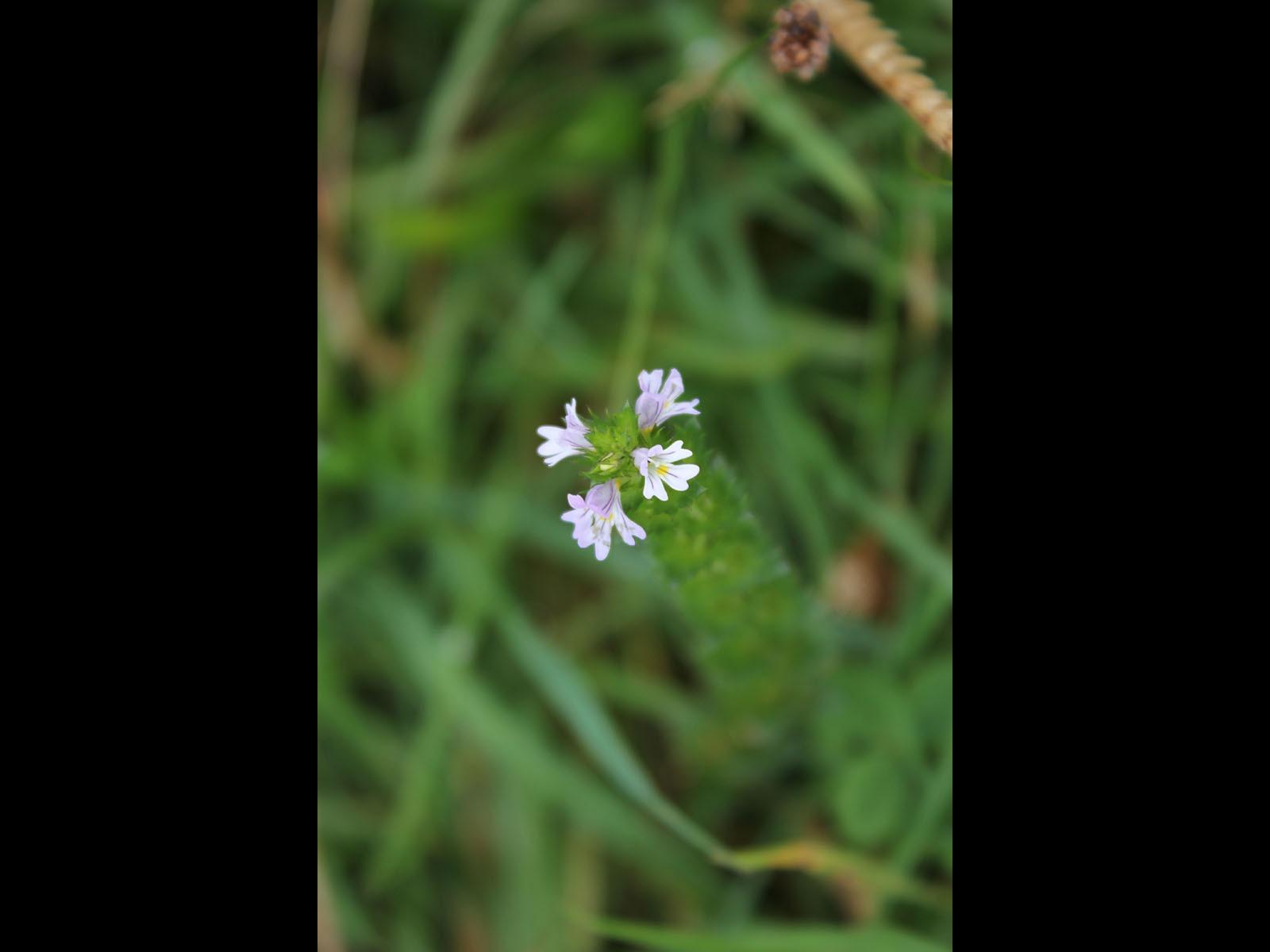 Flower by Stuart Alexander